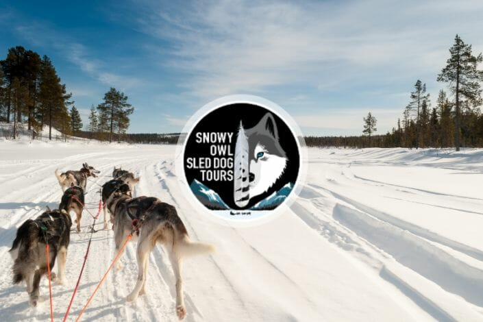 Snowy Owl Sled Dog Tours featured image of 6 sled dogs pulling a sled in snow.